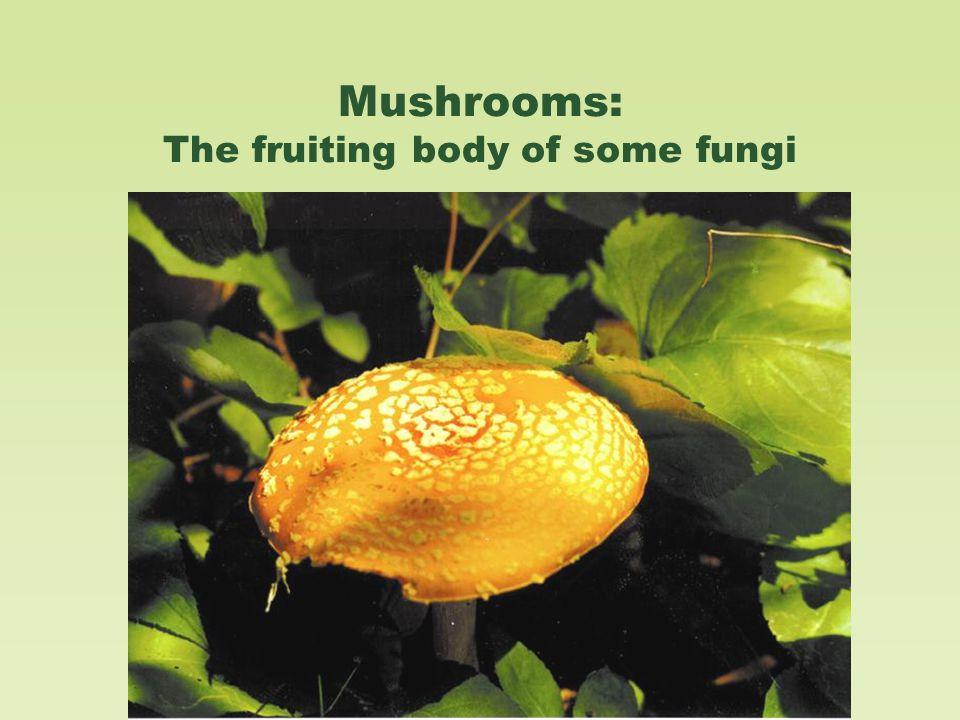 Mushrooms: The fruiting body of some fungi