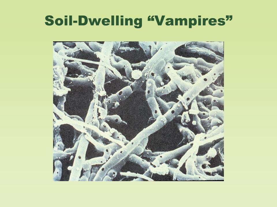 Soil-Dwelling Vampires