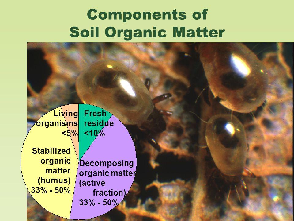 Components of Soil Organic Matter Decomposing organic matter (active fraction) 33% - 50% Stabilized organic matter (humus) 33% - 50% Fresh residue <10% Living organisms <5%