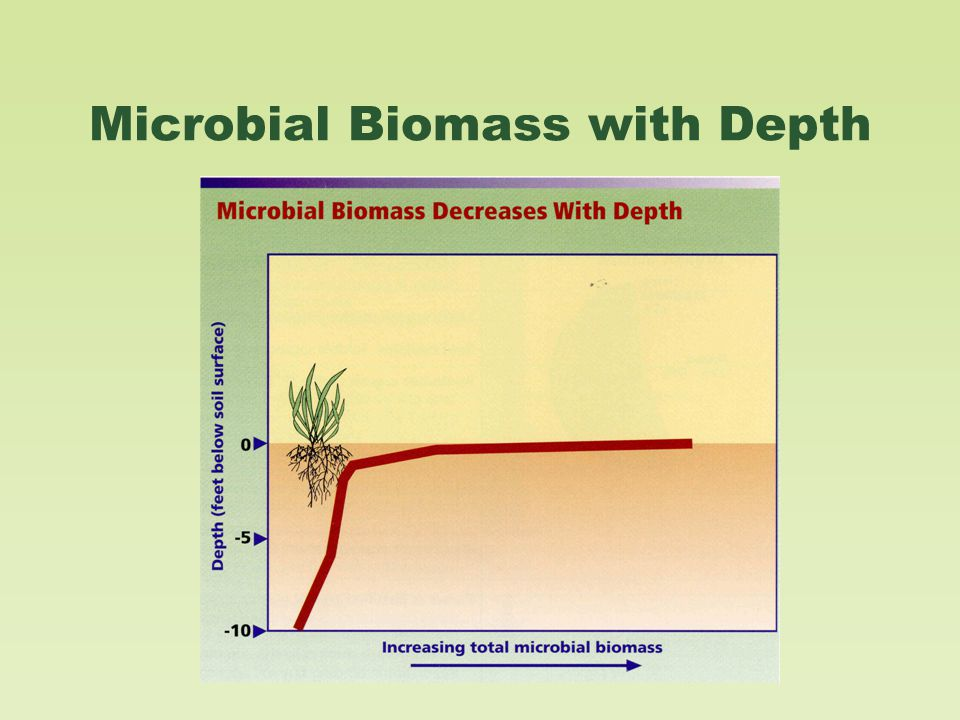 Microbial Biomass with Depth