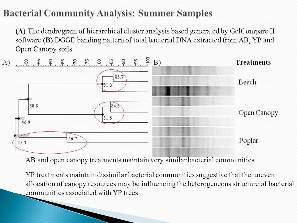 (A) The dendrogram of hierarchical cluster analysis based generated by GelCompare II software (B) DGGE banding pattern of total bacterial DNA extracted from AB, YP and Open Canopy soils.