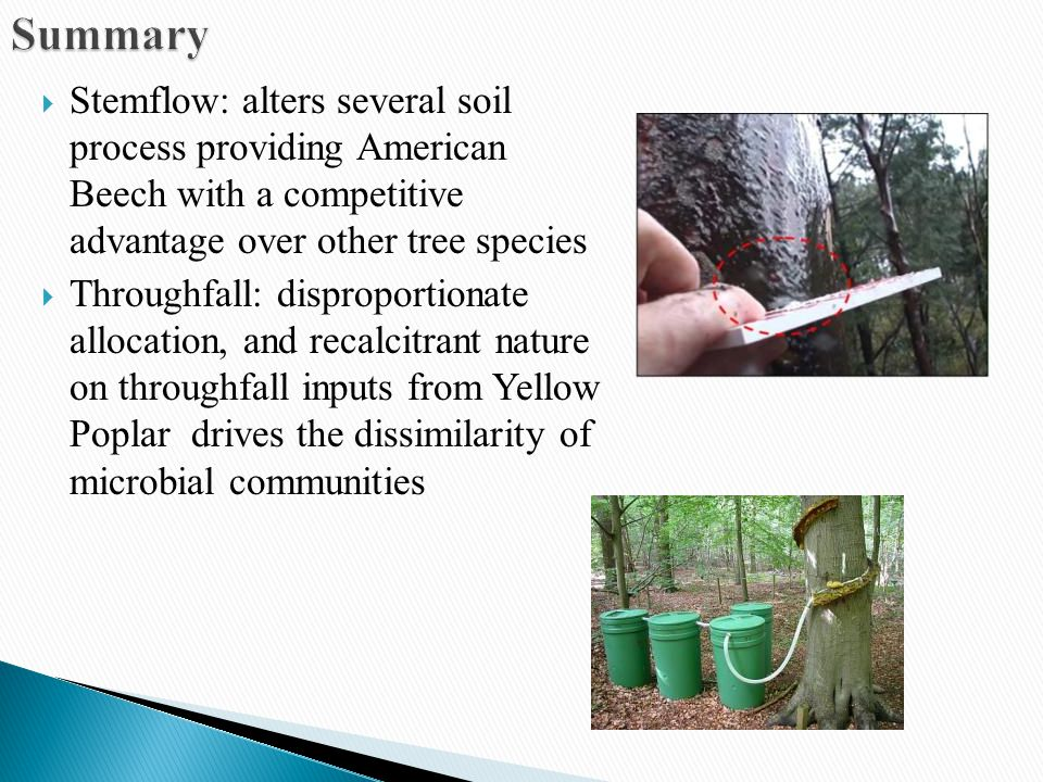  Stemflow: alters several soil process providing American Beech with a competitive advantage over other tree species  Throughfall: disproportionate allocation, and recalcitrant nature on throughfall inputs from Yellow Poplar drives the dissimilarity of microbial communities