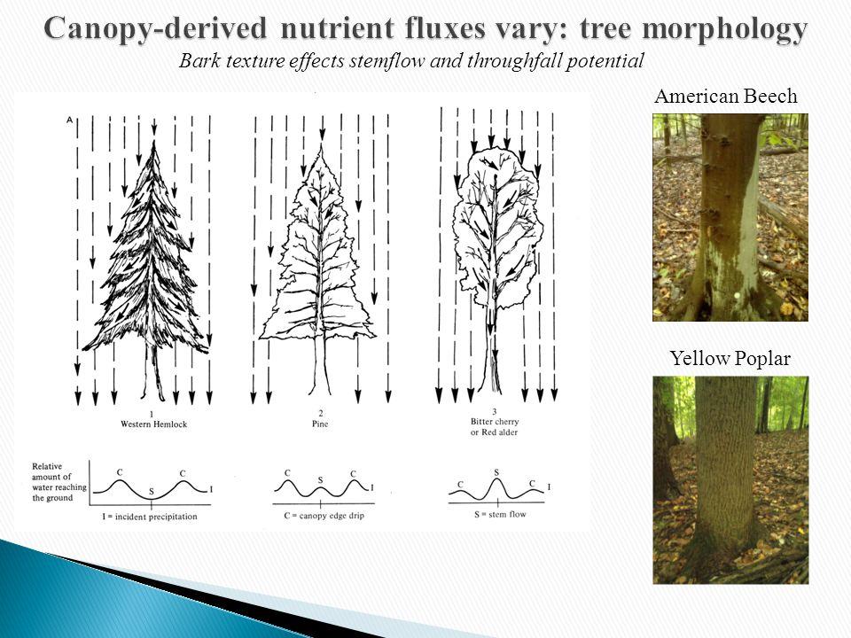 Leaf Area effects stemflow and throughfall potential Photo: biology.missouristate.edu/herbarium American Beech Yellow Poplar Photo: biology.missouristate.edu/herbarium