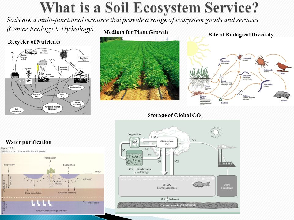 Sequestration of global CO 2 – Soils represent a significant storage reservoir of Carbon.