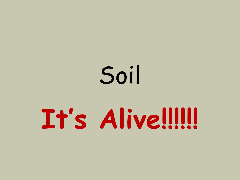 Soil It's Alive!!!!!!