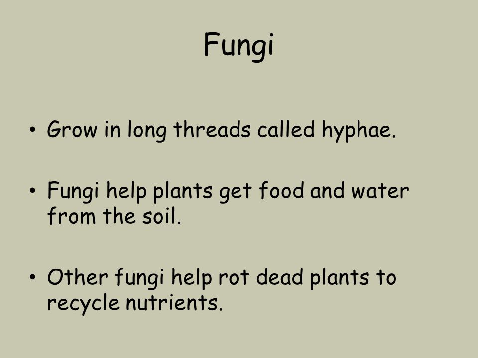 Fungi Grow in long threads called hyphae. Fungi help plants get food and water from the soil.