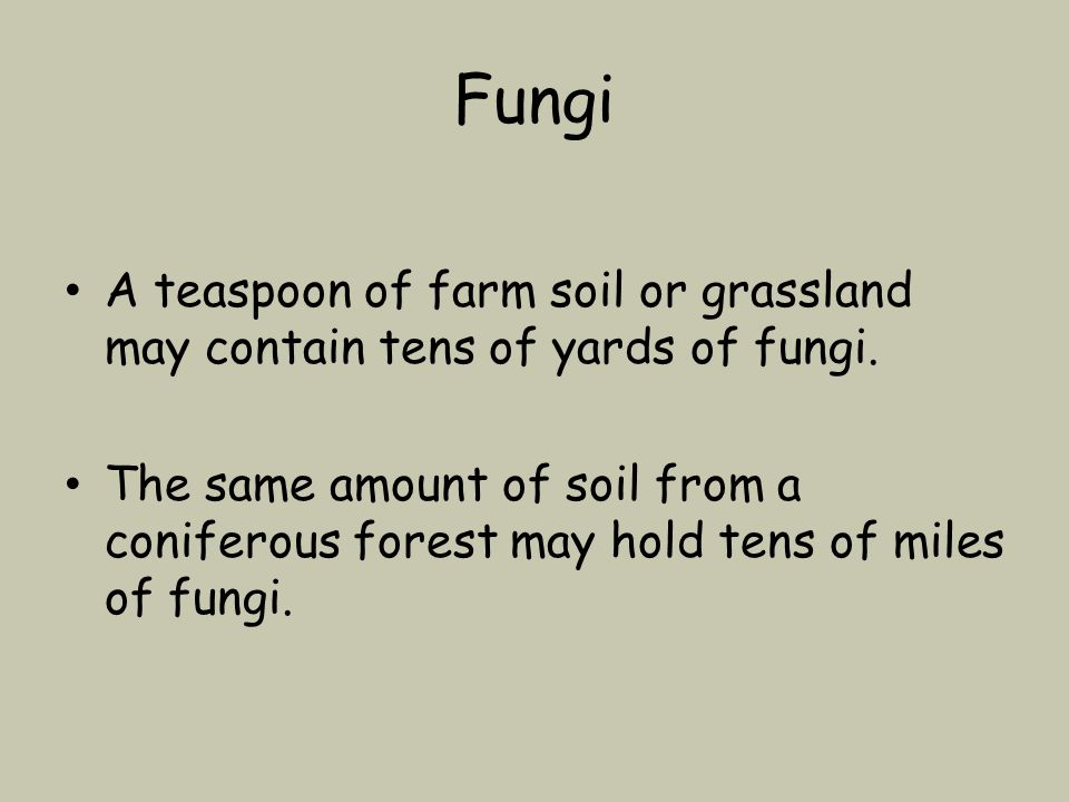 Fungi A teaspoon of farm soil or grassland may contain tens of yards of fungi.