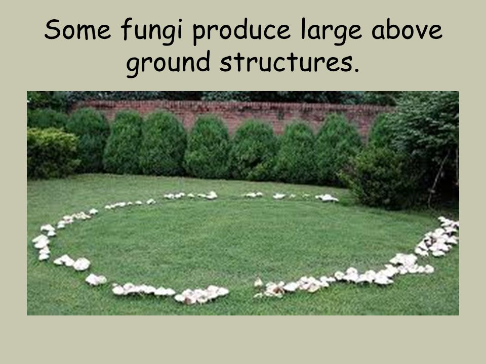 Some fungi produce large above ground structures.