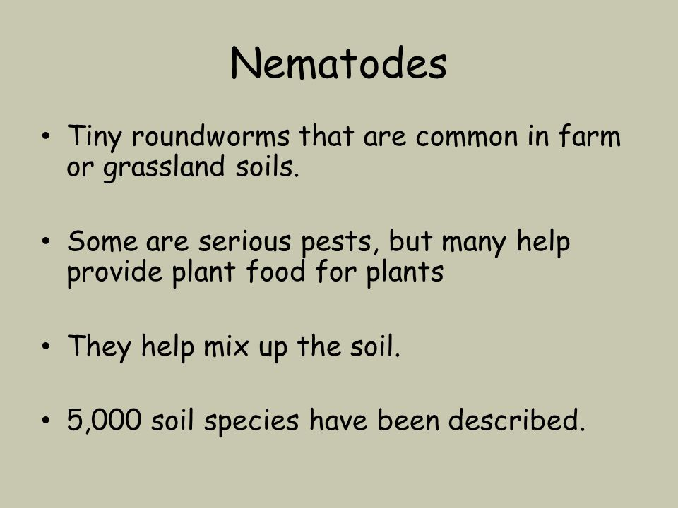 Nematodes Tiny roundworms that are common in farm or grassland soils.