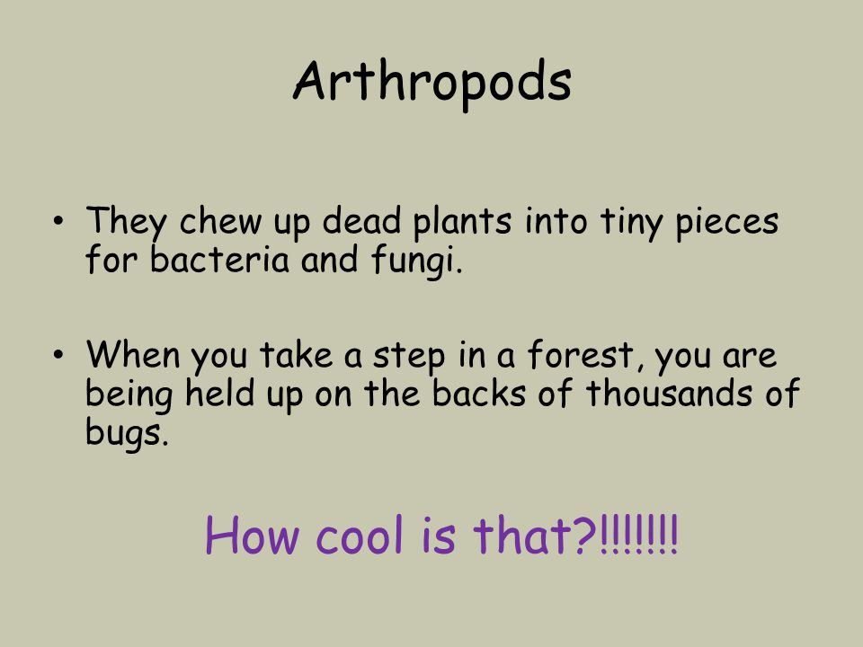 Arthropods They chew up dead plants into tiny pieces for bacteria and fungi.
