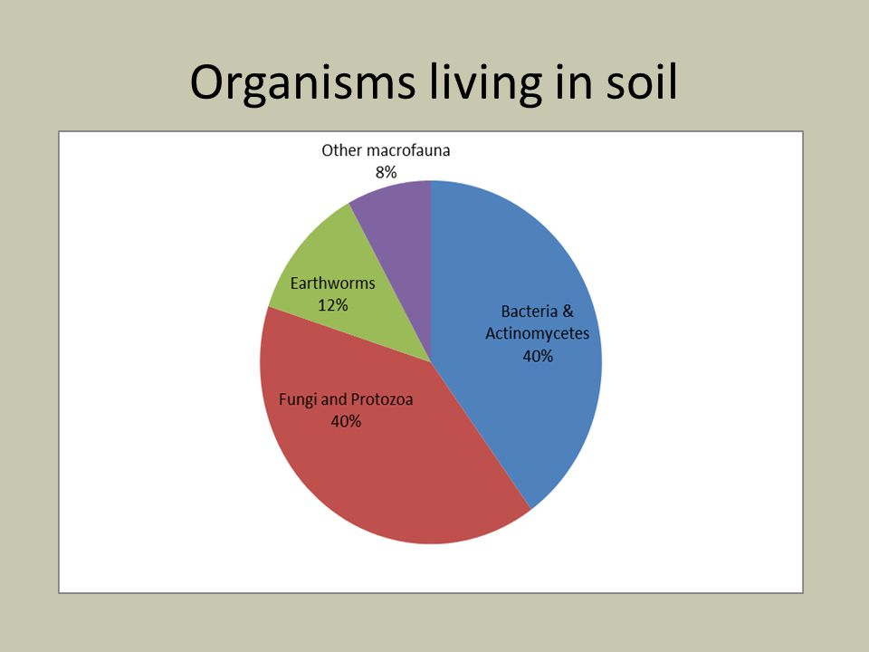 Organisms living in soil
