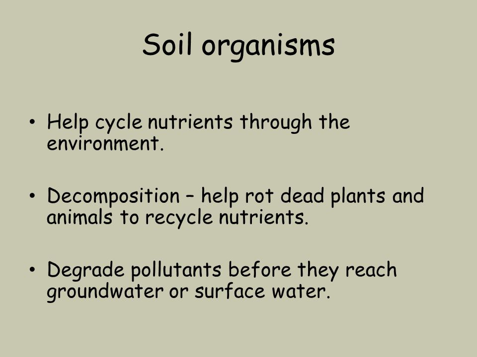 Soil organisms Help cycle nutrients through the environment.