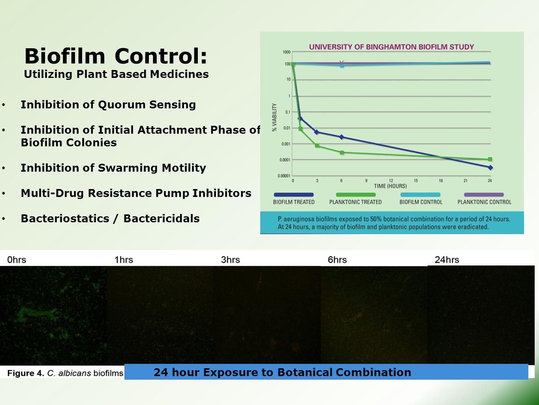 Biofilm Control: Utilizing Plant Based Medicines Inhibition of Quorum Sensing Inhibition of Initial Attachment Phase of Biofilm Colonies Inhibition of