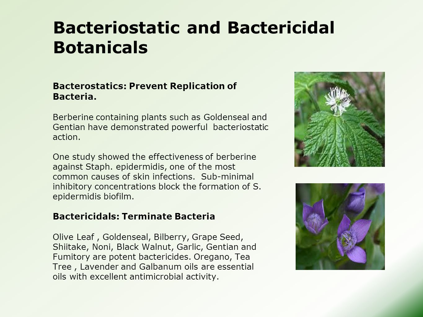 Bacterostatics: Prevent Replication of Bacteria. Berberine containing plants such as Goldenseal and Gentian have demonstrated powerful bacteriostatic