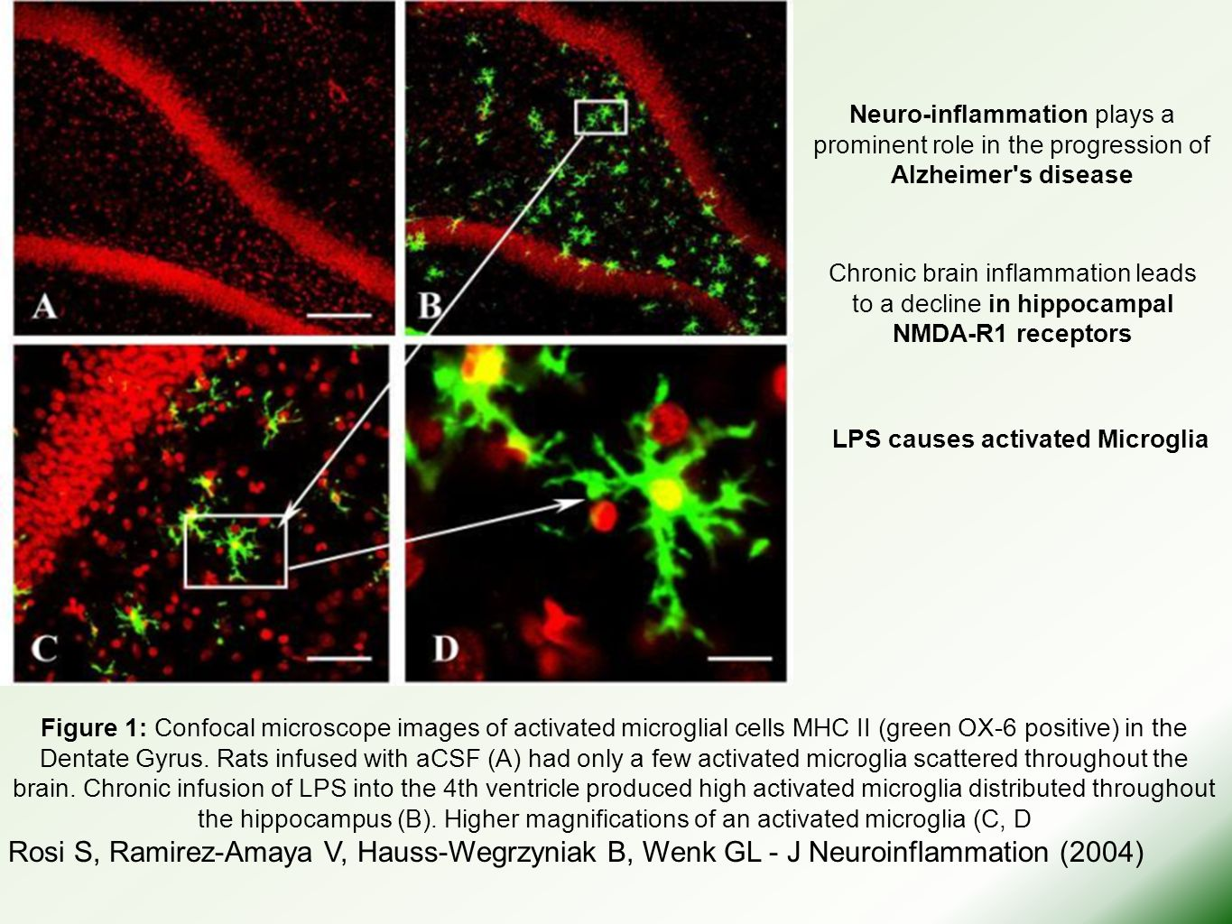 In summary, the systemic injection of LPS resulted in the reactivation of Collagen-induced arthritis in mice that was associated with the increased production of anti-CII IgG and IgG2a antibodies as well as the enhanced secretion of cytokines including IL-12, IFN- γ, IL-1β, and TNF-α.