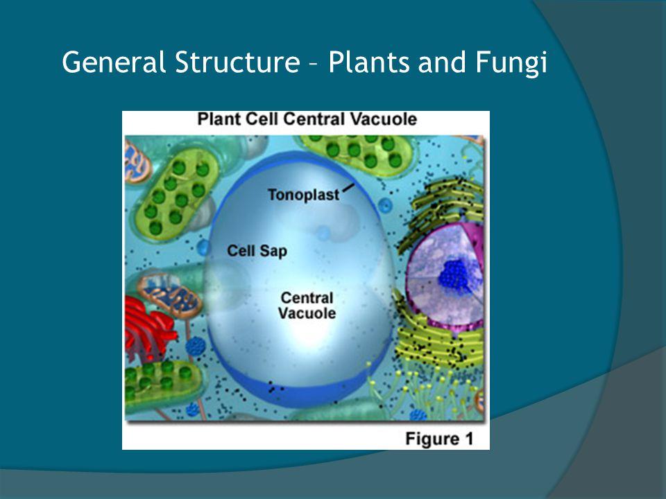 Vacuoles in Animals.