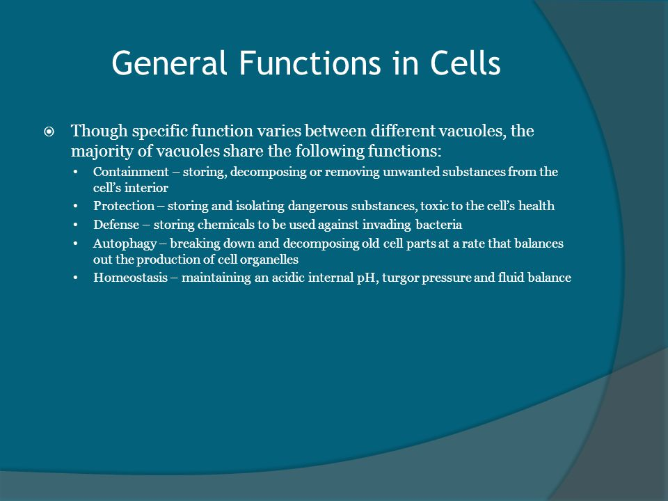 General Functions in Cells  Though specific function varies between different vacuoles, the majority of vacuoles share the following functions: Containment – storing, decomposing or removing unwanted substances from the cell's interior Protection – storing and isolating dangerous substances, toxic to the cell's health Defense – storing chemicals to be used against invading bacteria Autophagy – breaking down and decomposing old cell parts at a rate that balances out the production of cell organelles Homeostasis – maintaining an acidic internal pH, turgor pressure and fluid balance