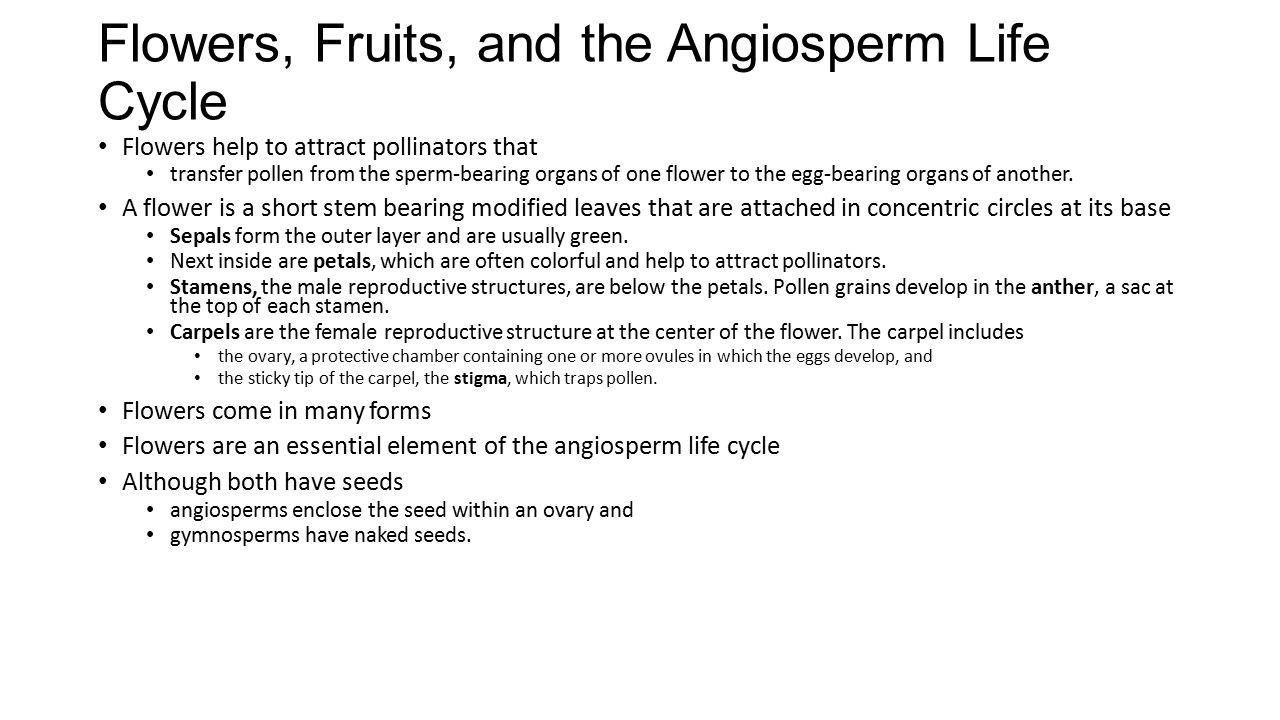 Flowers, Fruits, and the Angiosperm Life Cycle Flowers help to attract pollinators that transfer pollen from the sperm-bearing organs of one flower to