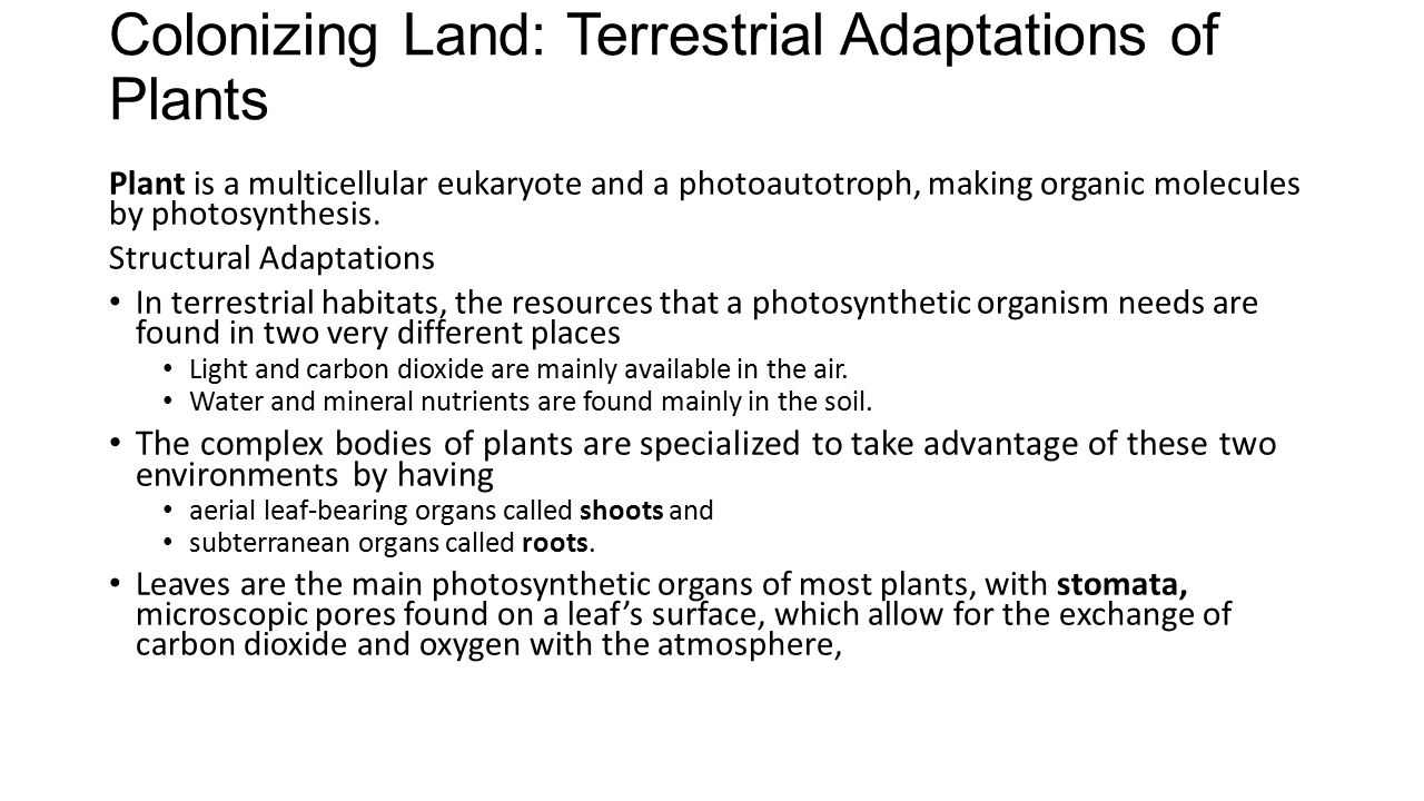 Colonizing Land: Terrestrial Adaptations of Plants Plant is a multicellular eukaryote and a photoautotroph, making organic molecules by photosynthesis