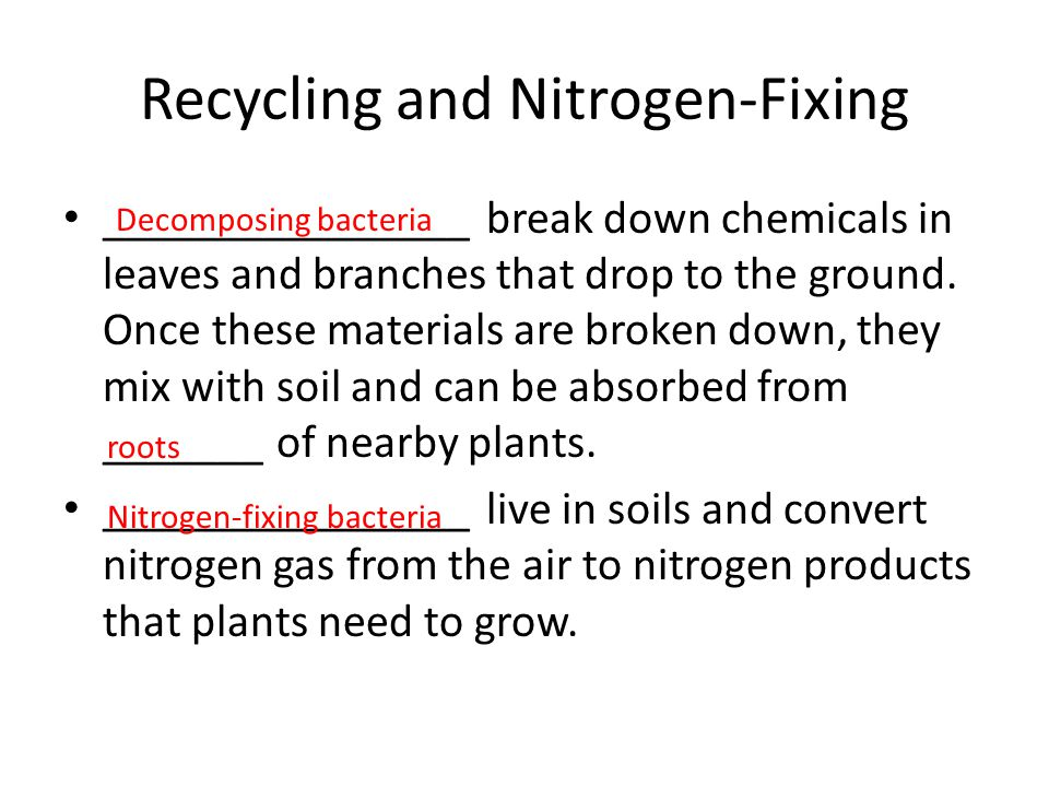 Recycling and Nitrogen-Fixing ________________ break down chemicals in leaves and branches that drop to the ground. Once these materials are broken do