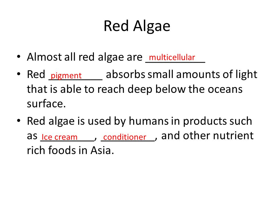 Red Algae Almost all red algae are __________ Red _________ absorbs small amounts of light that is able to reach deep below the oceans surface. Red al