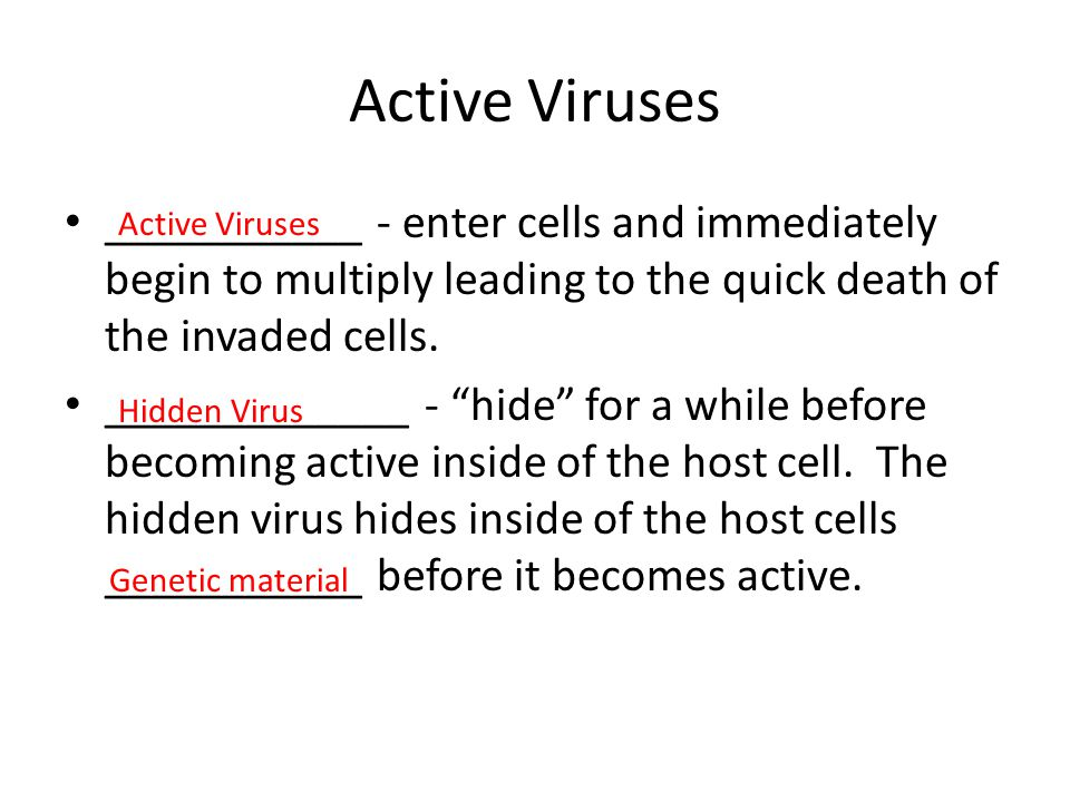 "Active Viruses ___________ - enter cells and immediately begin to multiply leading to the quick death of the invaded cells. _____________ - ""hide"" for"