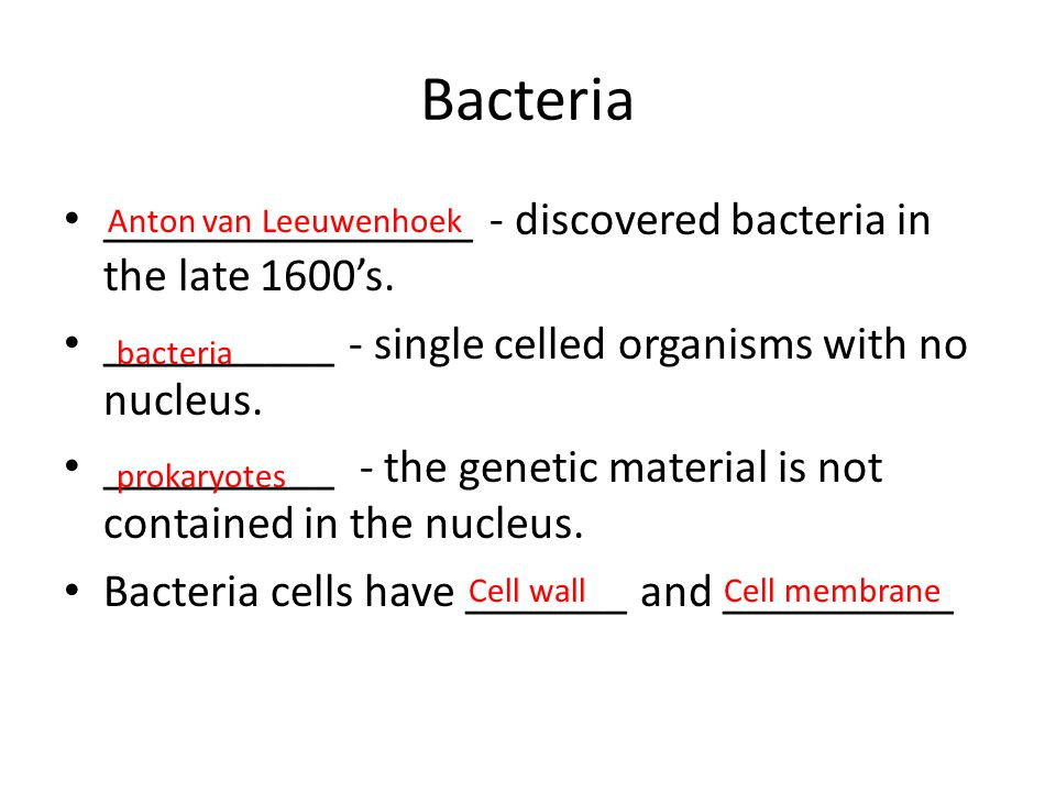 Bacteria ________________ - discovered bacteria in the late 1600's. __________ - single celled organisms with no nucleus. __________ - the genetic mat