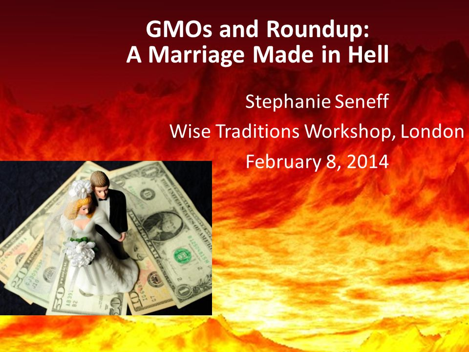 GMOs and Roundup: A Marriage Made in Hell Stephanie Seneff Wise Traditions Workshop, London February 8, 2014