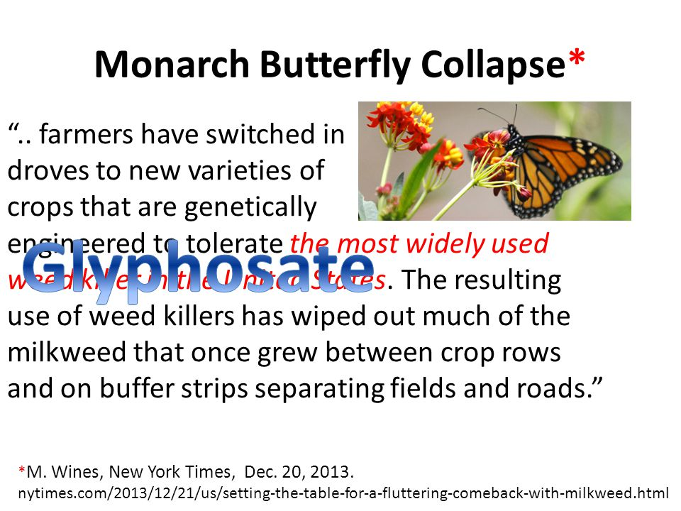 Monarch Butterfly Collapse* ..