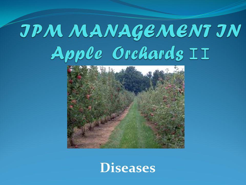 Apple Scab- Venturia inaequalis One of the Major Diseases in Apples
