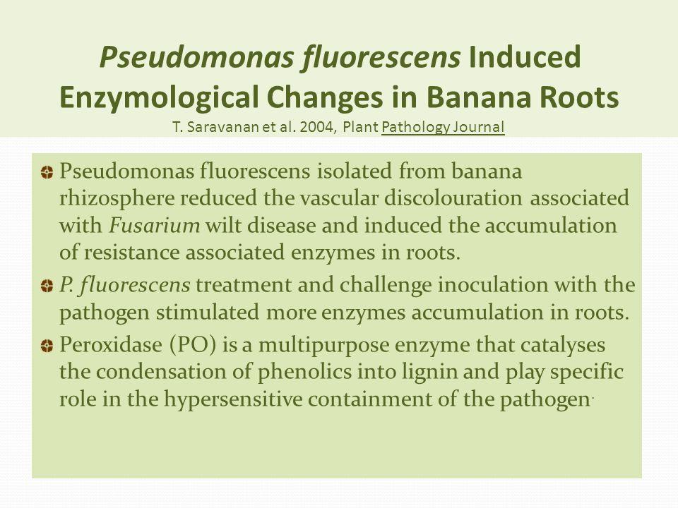 Pseudomonas fluorescens Induced Enzymological Changes in Banana Roots T. Saravanan et al. 2004, Plant Pathology Journal Pseudomonas fluorescens isolat