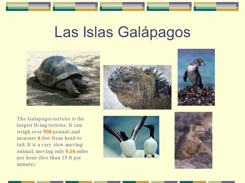 "Las Islas Galápagos Charles Darwin arrived in the Galapagos Islands in 1835 aboard the ship, ""The Beagle."" He studied and noted the similarities and d"