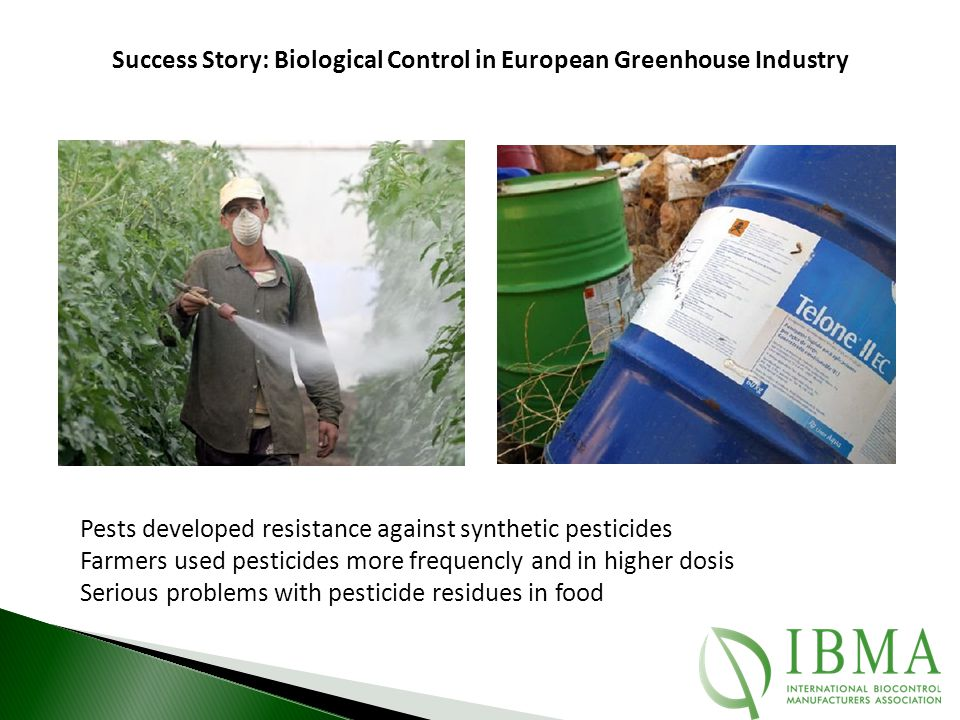 Pests developed resistance against synthetic pesticides Farmers used pesticides more frequencly and in higher dosis Serious problems with pesticide re