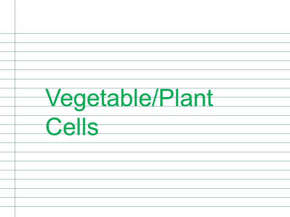 Vegetable/Plant Cells