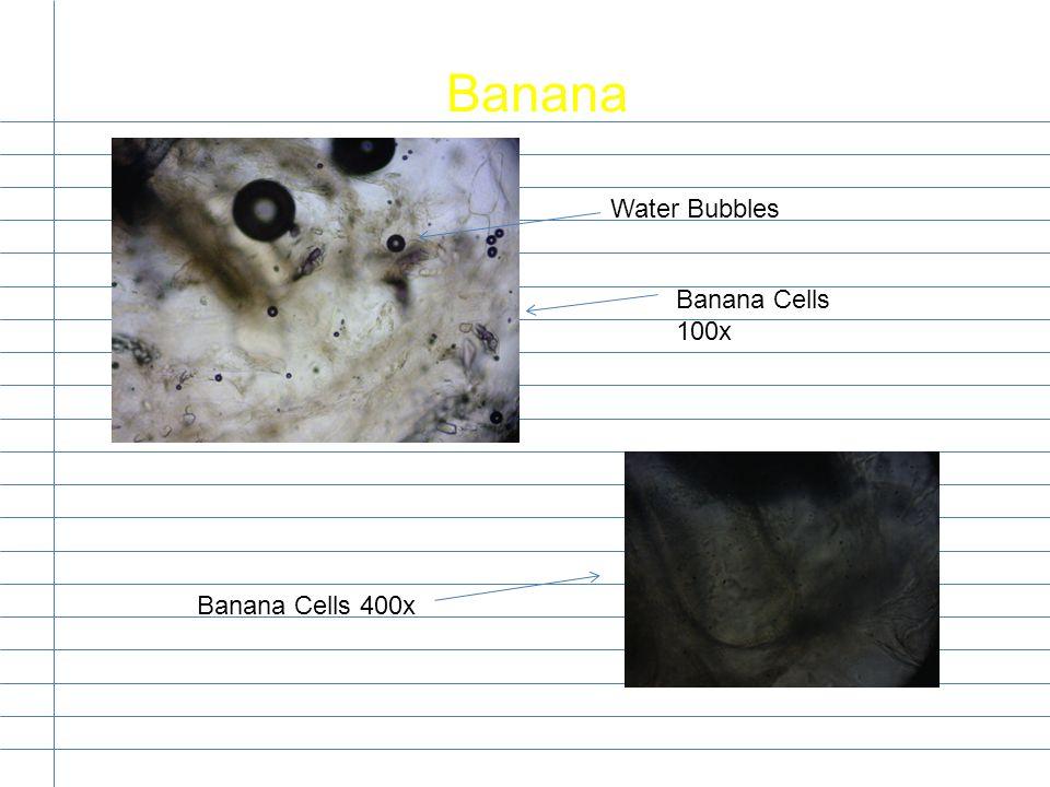 Banana Water Bubbles Banana Cells 100x Banana Cells 400x