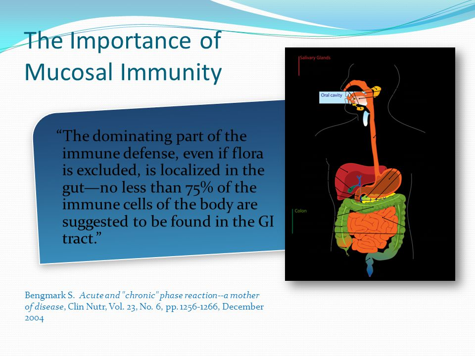 The Importance of Mucosal Immunity The dominating part of the immune defense, even if flora is excluded, is localized in the gut—no less than 75% of the immune cells of the body are suggested to be found in the GI tract. Bengmark S.