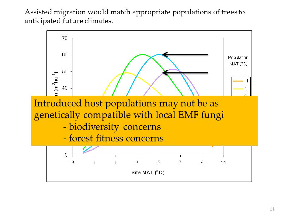 Assisted migration would match appropriate populations of trees to anticipated future climates. 11 Introduced host populations may not be as genetical