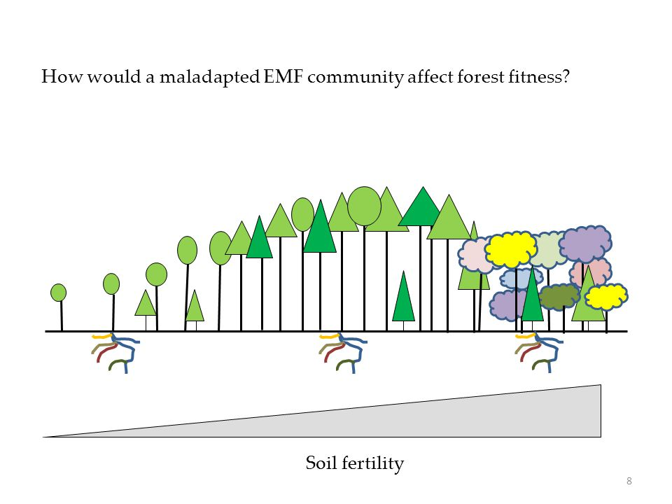 Soil fertility How would a maladapted EMF community affect forest fitness? 8
