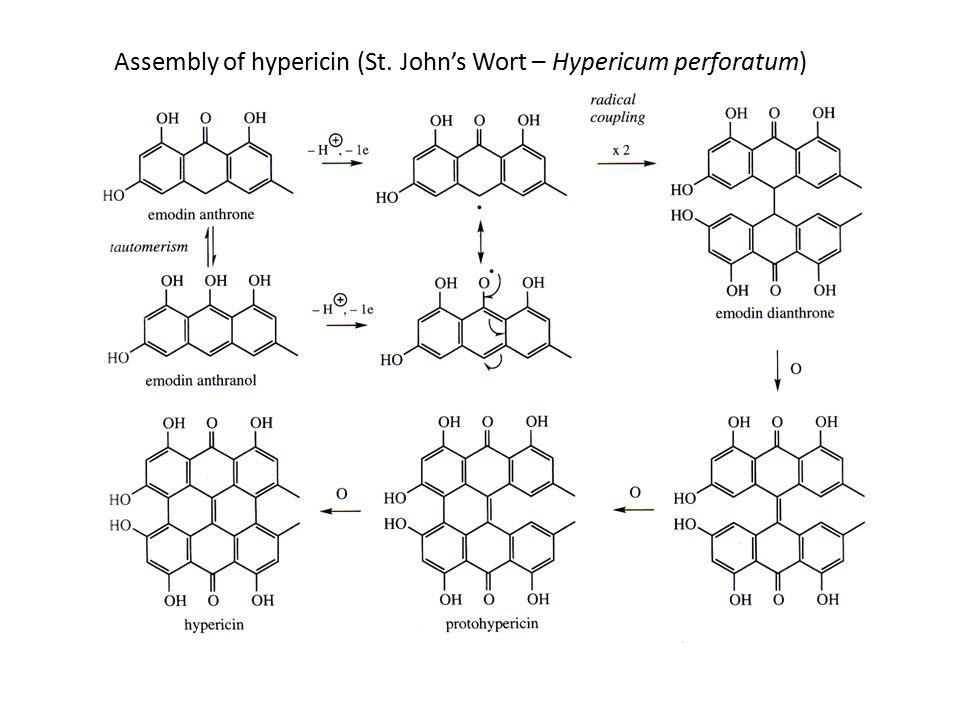 Assembly of hypericin (St. John's Wort – Hypericum perforatum)