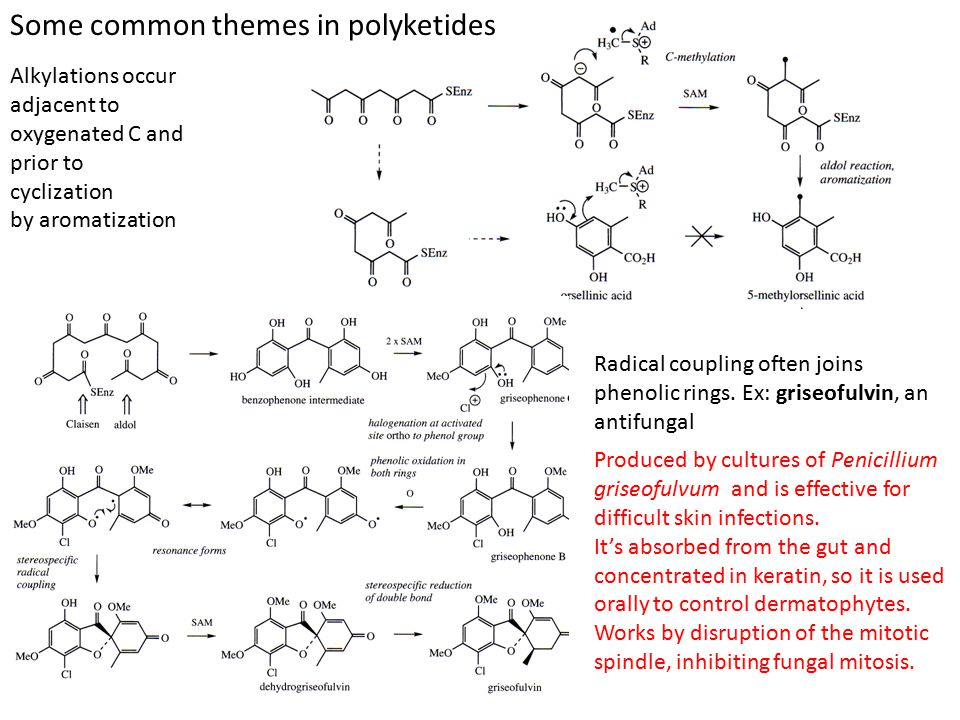 Oxidative cleavage, lactone and acetal formation results in major skeletal modifications Patulin is a potent carcinogen produced by Penicillium patulum, a common contaminant on apples.