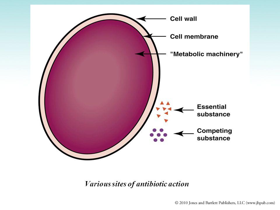 Various sites of antibiotic action