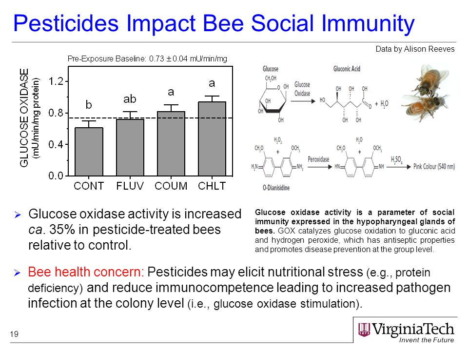 19 Pesticides Impact Bee Social Immunity Glucose oxidase activity is a parameter of social immunity expressed in the hypopharyngeal glands of bees.