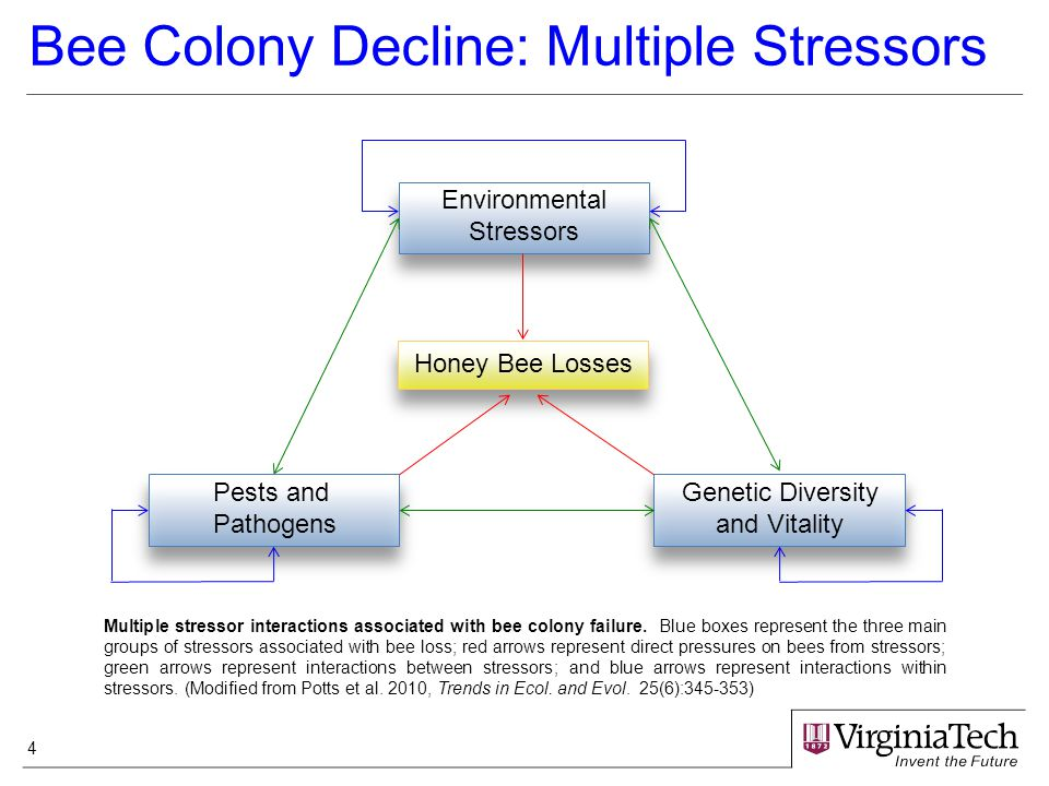 4 Environmental Stressors Pests and Pathogens Genetic Diversity and Vitality Honey Bee Losses Bee Colony Decline: Multiple Stressors Multiple stressor interactions associated with bee colony failure.
