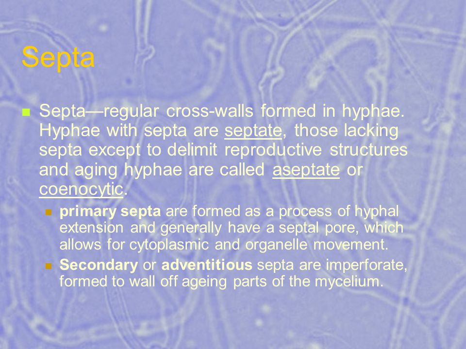Septa Septa—regular cross-walls formed in hyphae. Hyphae with septa are septate, those lacking septa except to delimit reproductive structures and agi
