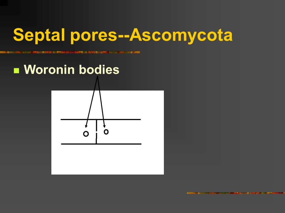 Septal pores--Ascomycota Woronin bodies