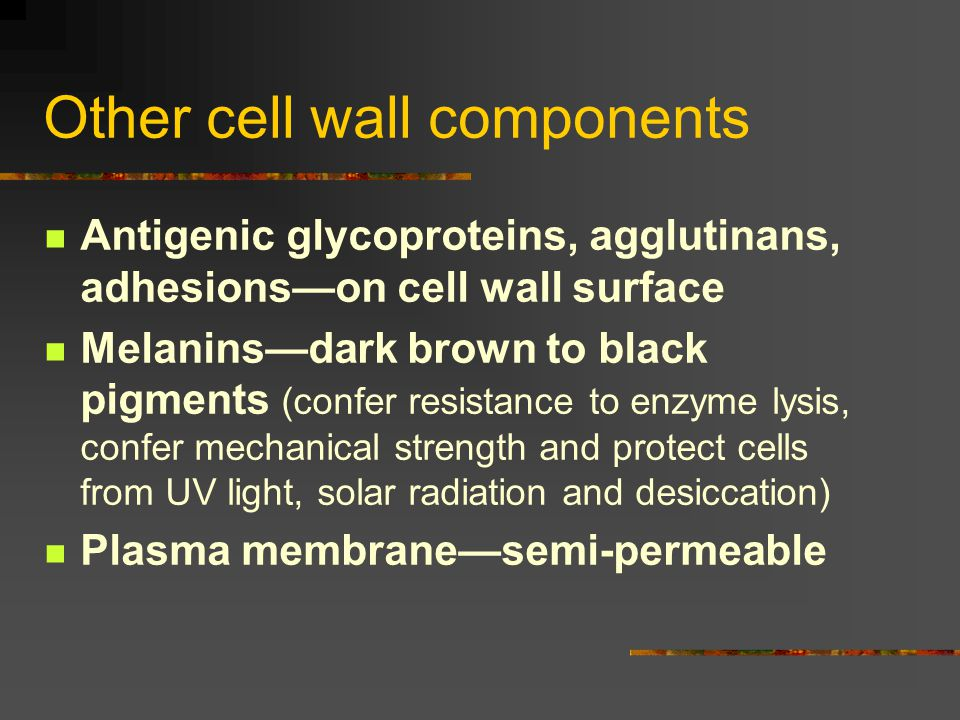 Other cell wall components Antigenic glycoproteins, agglutinans, adhesions—on cell wall surface Melanins—dark brown to black pigments (confer resistan