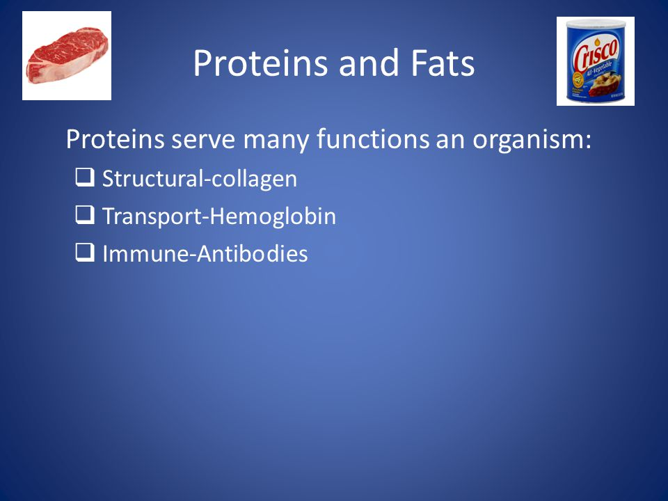 Proteins and Fats Proteins serve many functions an organism:  Structural-collagen  Transport-Hemoglobin  Immune-Antibodies