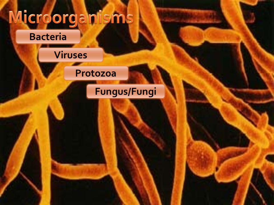 Bacteria Viruses Protozoa Fungus/Fungi