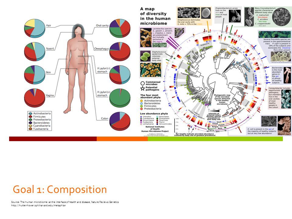 Goal 1: Composition Source: The human microbiome: at the interface of health and disease, Nature Reviews Genetics http://huttenhower.sph.harvard.edu/m