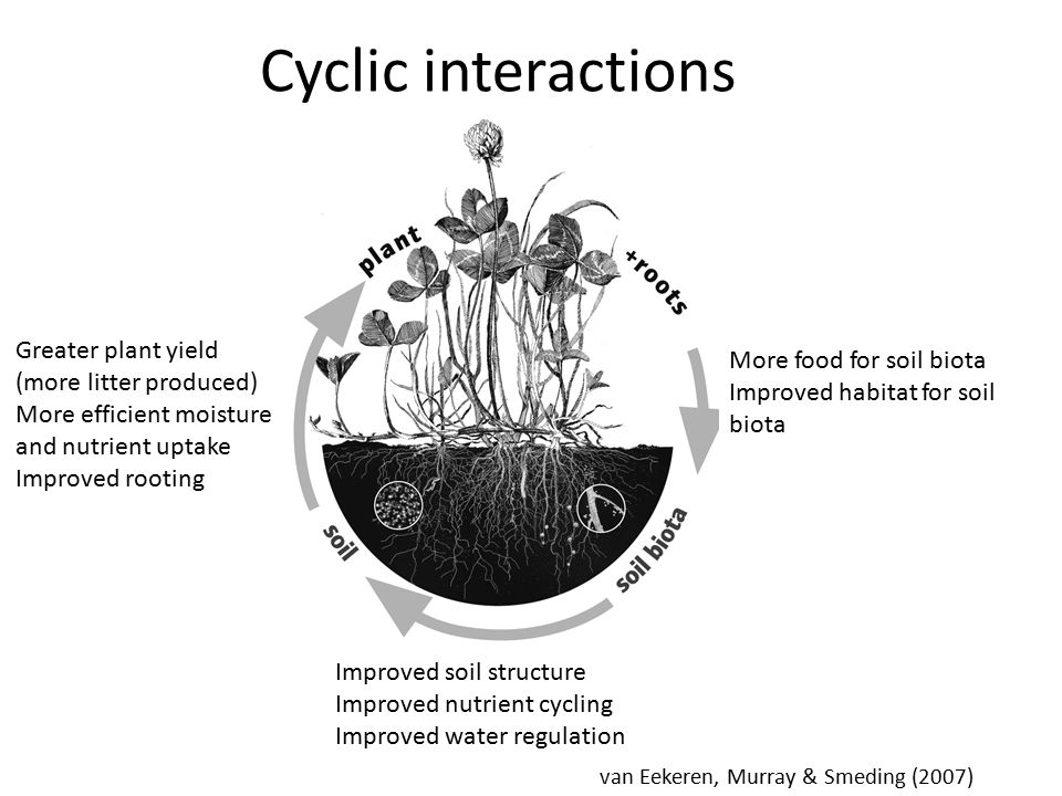 van Eekeren, Murray & Smeding (2007) Cyclic interactions More food for soil biota Improved habitat for soil biota Improved soil structure Improved nutrient cycling Improved water regulation Greater plant yield (more litter produced) More efficient moisture and nutrient uptake Improved rooting
